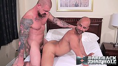 Big and handsome bears pound each other deep and hard in the ass