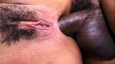 A big black dick is hard and ready to wreck some latina snatch